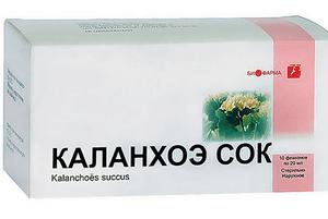 Каланхоэ от насморка: лечебные свойства растения, обзор отзывов о применении, как лечить взрослых, рецепты для детей