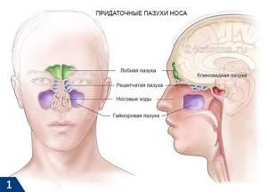 Этмоидит — что это такое, симптомы и лечение у взрослых