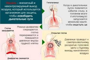 Пастилки от кашля Бронхикум: инструкция и применение леденцов для лечения детей и взрослых