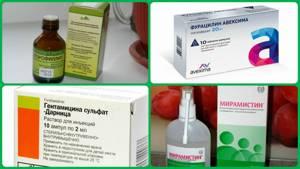 Гайморит: расположение пазух, причины, как проявляется, лекарства и средства, ингаляции, процедура «ямик», что делать, чтобы избавиться от болезни, меры профилактики
